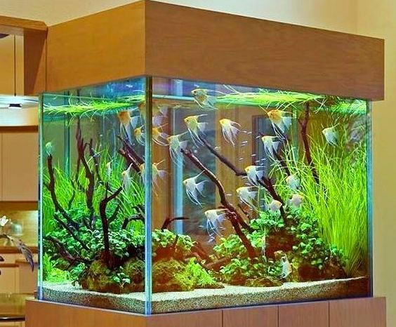 akvarium-doma.jpg