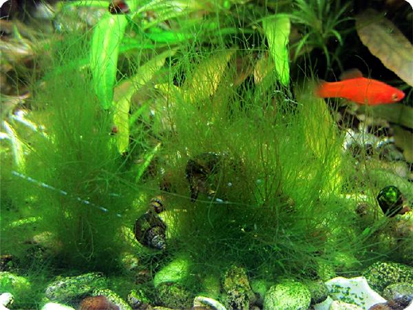 algae.jpg