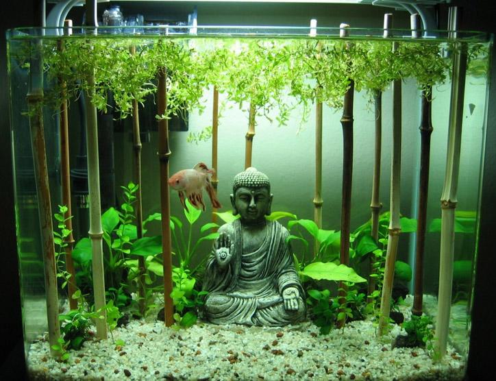 Бамбук-в-аквариуме.jpg