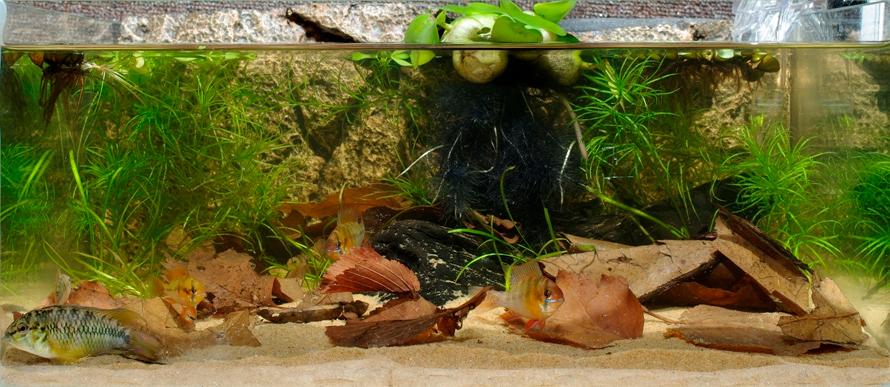 biotope-aquarium-c2013_96-1.jpg
