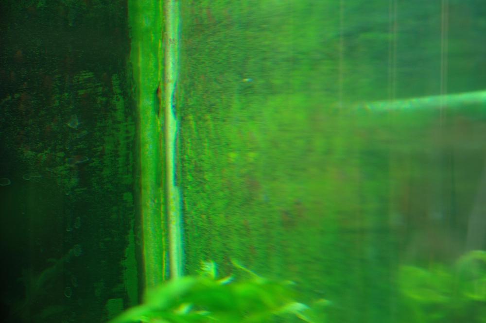 greendustalgae.jpg