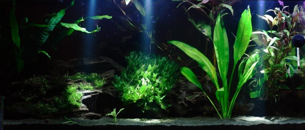 osveschenie-akvariuma-dlya-rasteniy_7-1024x438.jpg