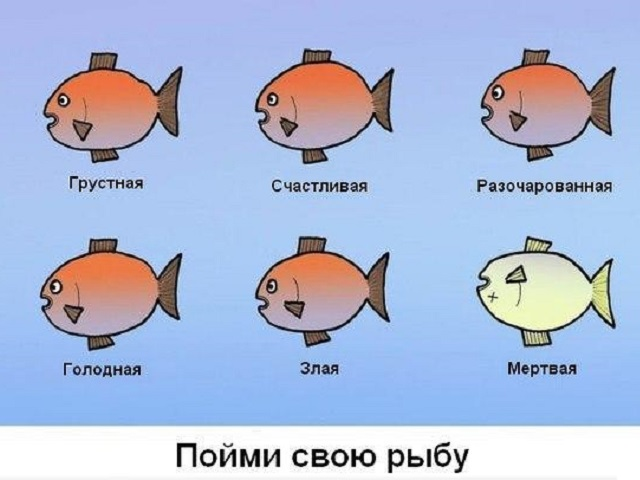 poimi-rybku.jpg