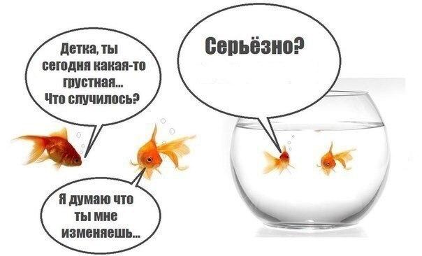 Анекдот что такое логика аквариум