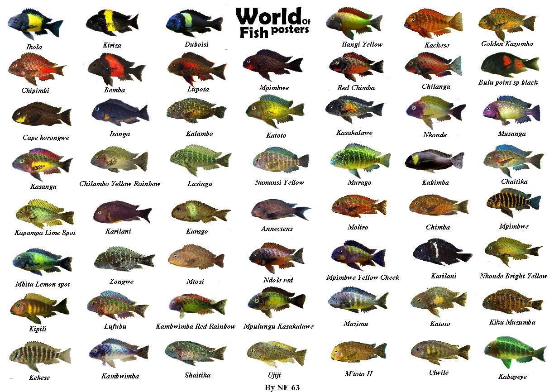 Аквариумные рыбки фото и названия совместимость аквариумных рыбок