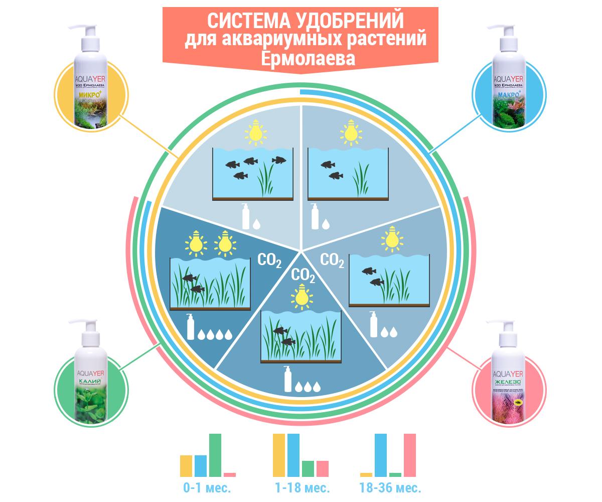 yermolayev-system-infographic.jpg