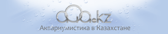 Аквариумистика в Казахстане